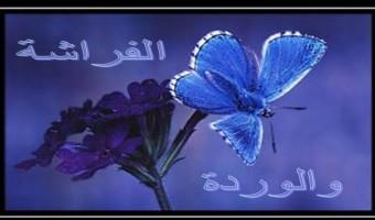 الفراشة والوردة
