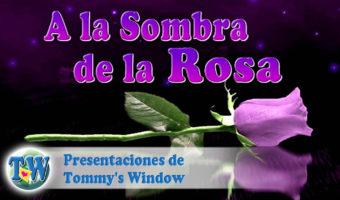 A la Sombra de la Rosa