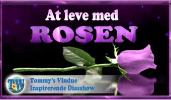 At leve med Rosen
