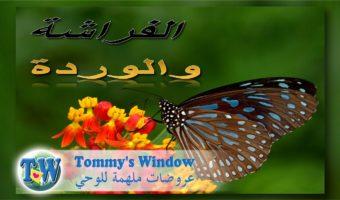 e0bdd050f0ea19 Arabic Archives – Tommy s Window