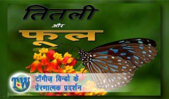 तितली और  फूल