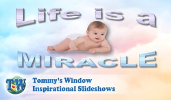 5547064cc English Archives – Tommy s Window