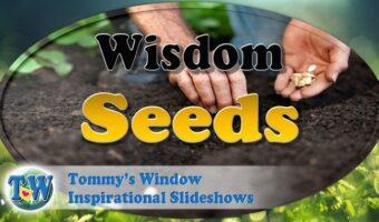 Wisdom Seeds