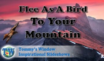 Flee as a Bird to Your Mountain - Gain a superior perspective for your life