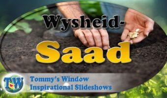 Wysheid-Saad