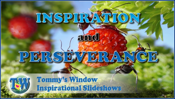 Inspiration and Perseverance